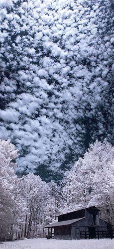 Образование инея на ветках деревьев зимой.