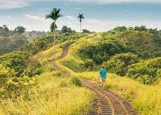 Campuhan Ridge Walk- Ubud, Bali
