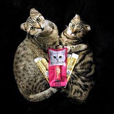 "Boris: ""Family Purtrait!!"" Buffy: ""Just Us and Food!!"" .  #borisandbuffy #sgcats  #catfollowers  #vscogood #catsofgram #catfood  #ねこ部 #ねこ #猫部 #ilovecat #cutepetclub #愛猫 #topcatphoto #scottishfold #munchkin #bengal #britishshorthair #캣스타그램  #weeklyfluff #고양이  #instacat_meows #cutecatcrew #thedailykitten #meowsandwoofs #dailyfluff #Kitcatsg #filletfresh #purrpuree"