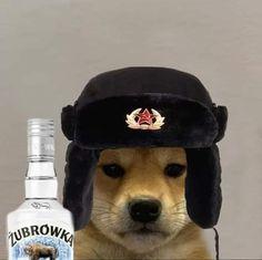 Dog Memes, Dankest Memes, Funny Memes, Best Gaming Wallpapers, Funny Wallpapers, Dog Tumblr, Meme Faces, Stupid Memes, Reaction Pictures