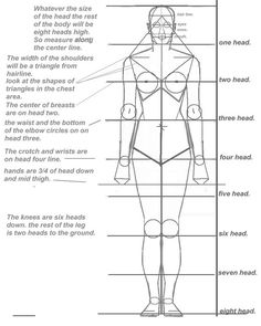 basic human proportion sheet