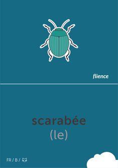 Scarabée #flience #animal #insects #english #education #flashcard #language