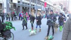 Montreal St Patrick's Day 2013! The Montreal SPCA once again invites Montreal Dog Blog to be part of the parade! Thank you so very much to all that were there for the animals!