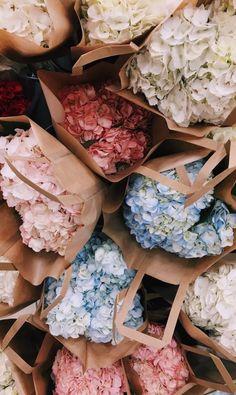 Bags 350928995964504210 - Hydrangeas – hortensias VSCO – fatmoodz Source by patriciabenozio My Flower, Beautiful Flowers, Beautiful Beautiful, Beautiful Pictures, Flower Aesthetic, Planting Flowers, Floral Arrangements, Bloom, Inspiration