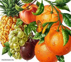Иллюстрации для соков ROTTALER. on Behance