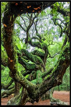 Forest Path, Tree Forest, Magic Forest, Old Trees, No Photoshop, Growing Tree, Sculpture, Tree Art, Science And Nature