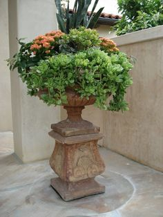 Traditional Italian urn over flowing with mixed succulents, Kalachoe and Sanseveria.