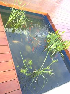 Natural Pond, Aquarium, Fish, Nature, Fish Stand, Aquarius, Naturaleza, Fish Tank, Nature Illustration