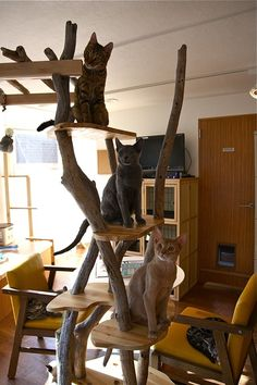 荻窪 「CatRoomこるね」 1st : 猫山細道の猫カフェ写真館