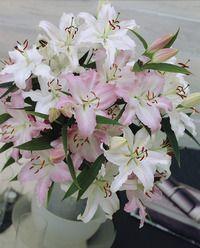 Wedding Bells Oriental Lilies