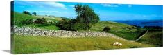The Irish Image Collection Premium Thick-Wrap Canvas Wall Art Print entitled County Galway, Connemara, Ireland, None