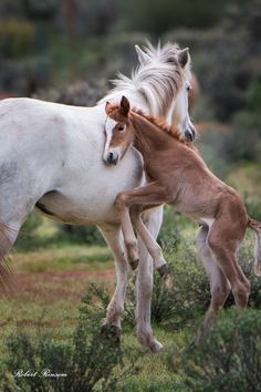 Mama horse and pony – Manuela Reiter - Baby Animals Baby Horses, Cute Horses, Horse Love, Wild Horses, All The Pretty Horses, Beautiful Horses, Animals Beautiful, Cute Baby Animals, Animals And Pets