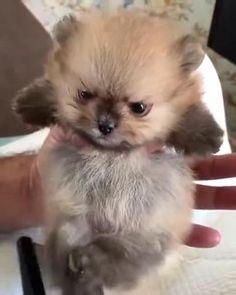 Cute Wild Animals, Baby Animals Super Cute, Cute Baby Dogs, Baby Animals Pictures, Cute Funny Dogs, Cute Little Animals, Cute Funny Animals, Animals Beautiful, Cute Cats