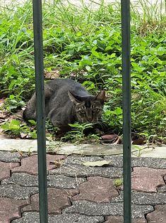 02/06 - Cat in a jail....