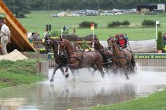 Dutch Warmblood (KWPN-NA) horses are competing at some of the highest level equestrian competitions in the world.