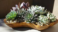 Studio Floral Dora Santoro: Suculentas