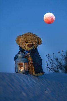 Big Teddy, Cute Teddy Bears, Tatty Teddy, Bear Wallpaper, Galaxy Wallpaper, Baby Bear Tattoo, Teddy Hermann, Ted Bear, Teddy Bear Pictures