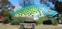 Swan Hill, Victoria :: Murray Cod -- Oh my cod!