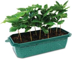 ThinkGeek Grow Your Own Coffee: every purchase through this link supports charity.