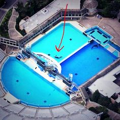 Oracs at SeaWorld bored and alone, nothing else to do but float & get sunburned.This is torture for the creatures.(OrcaSOS)
