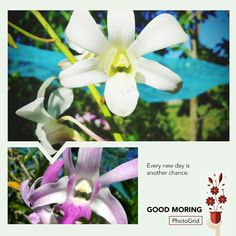 #Flower New Day, Flowers, Plants, Brand New Day, Floral, Plant, Royal Icing Flowers, Florals, Flower