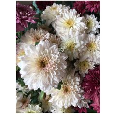 Chrysanthemum white photo - Home Gardening for Beginners Chrysanthemums, Gardening For Beginners, White Flowers, Centerpieces, Home And Garden, Wall Decor, Decorations, Wallpapers, Stock Photos