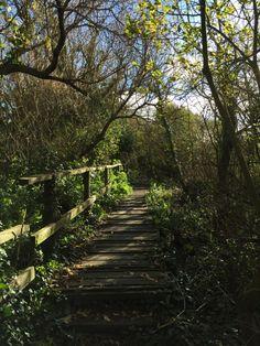 Dorset Adventure, Blissful walk. Happylittlefeather.com