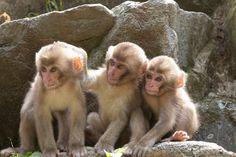 Three naughty boys - Snow monkeys by Masashi Mochida  3> !