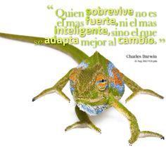 """""""Quien sobrevive no es el mas fuerte, ni el mas inteligente, sino el que se adapta mejor al cambio."""" #CharlesDarwin #Citas #Frases @Candidman"""