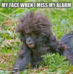 My face when I miss my alarm.