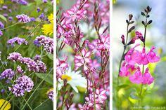 Les plantes à floraison longue durée                                                                                                                                                                                 Plus All Flowers, Green Flowers, Garden Crafts, Garden Projects, Gaura, Terrarium, Garden Online, Pink Plant, Garden Features