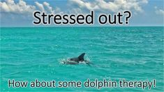 Athella is an Ascended Master who talks through Christina Hill. Ascended Masters, Stressed Out, Watch V, Dolphins, Whale, Relax, Healing, Youtube, Movies