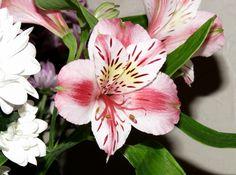 Bellisima, Bouquet, Flowers, Plants, Bouquet Of Flowers, Bouquets, Plant, Royal Icing Flowers, Floral Arrangements