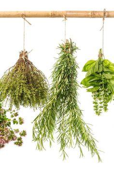 5 metodi infallibili per conservare le erbe aromatiche | Guida Giardino