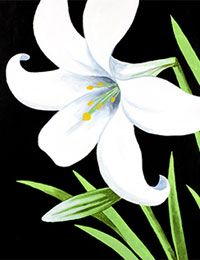 Paint an Easter Lily for a canvas painting party. #socialartworking