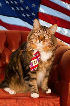 Meet Hank, the Virginia cat running for U.S. Senate. He supports spay-and-neutering programs, 'natch. http://yhoo.it/wyHYGy
