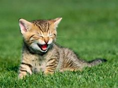 Baby Animals images baby kittens HD wallpaper and background . Cute Kittens, Baby Kittens, Cats And Kittens, Smiling Animals, Baby Animals, Funny Animals, Cute Animals, Funniest Animals, Smiling Cat