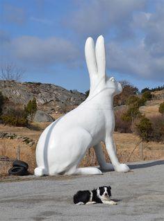 Giant rabbit. wow.