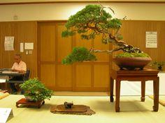 展示会 2の画像 - 与吉の我流盆栽ブログ - Yahoo!ブログ
