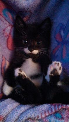 "* * "" Seez? Some paw pads pink, some black, cuz me fur color be black n' white."""