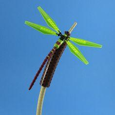 Obligatory Dragonfly | by cmaddison