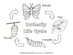 life cycle of a butterfly sequencing cards in color and black white kindergartenklubcom pinterest cycling butterfly and black
