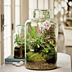 To make a terrarium, choose a glass container with an opening wide enough for your hand. Gently add an inch or two of washed, fine gravel. Top gravel with a thin layer of activated aquarium carbon. (Youll find both items at your local pet store.) Next, add moistened potting soil, and youll be ready to plant. Create a collection of plants, or showcase just one.