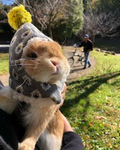 Bunny in a hat!