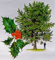 watercolour of holly tree, Cuileann