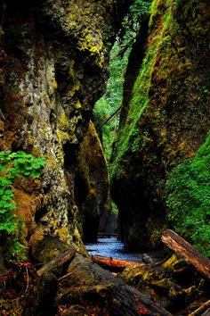 Oneonta Gorge, Oregon    photo via jamie
