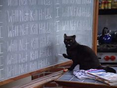 Sabrina the Teenage Witch's Salem | Black Cats Are The Best