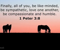 #verseoftheday #scriptureoftheday #bibleverseoftheday Scripture Of The Day, Verse Of The Day, 1 Peter 3, Love One Another, Compassion, First Love, Bible, Mindfulness, Movie Posters