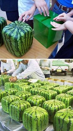 Squared watermelon?? - What the heck?