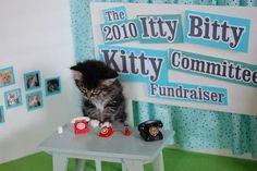 Kitty Call Center
